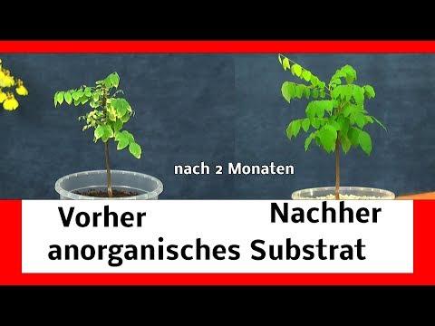 Pflanzen retten / spezial Substrat für Pflanzen / anorganisches Substrat