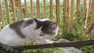 ГОВОРЯЩИЕ КОТЫ \ TALKING CATS
