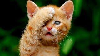 Я РЖАЛ ПОЛЧАСА. Смешные Коты и Собаки. ПРИКОЛЫ С ЖИВОТНЫМИ. #22