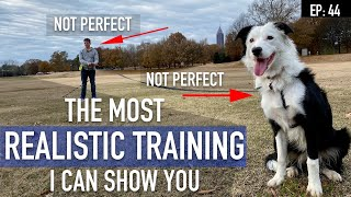 How I'm Coaching My Canine Proper Now (The MOST REALISTIC Coaching Video I Can Make)