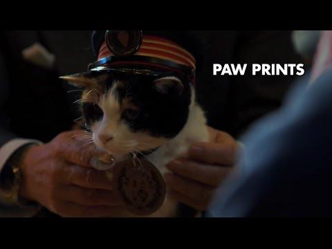 Chris Tarrant: Extreme Railway Journeys – Tama the Station Master Cat