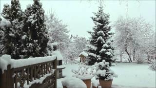 preview picture of video 'Karlsruhe Winter im Garten in Hagsfeld-Geroldsäcker am 15.02.2013'