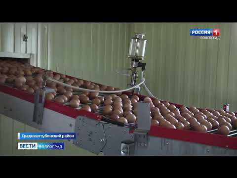 На территории Волгоградской области Управлением Россельхознадзора проведены рейдовые мероприятия на волгоградских предприятиях