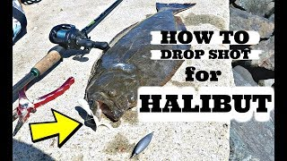 HOW TO DROP SHOT For HALIBUT (Flounder) | San Diego