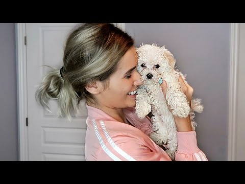 SURPRISING GIRLFRIEND WITH A PUPPY! (EXTREMELY CUTE)