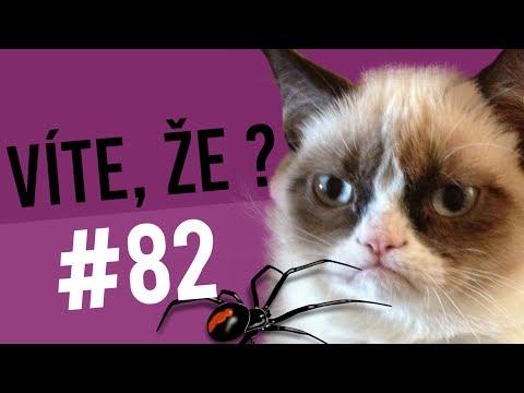#82 ● VÍTE, ŽE...?