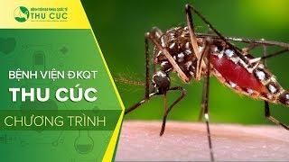 Muỗi Aedes Aegypty và Sốt xuất huyết