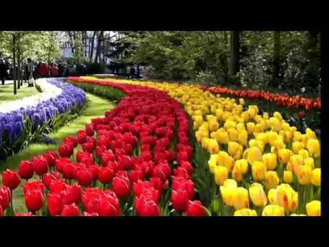 Los Jardines de Keukenhof en Holanda