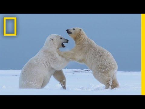 סרטון מרהיב של בעלי החיים באלסקה