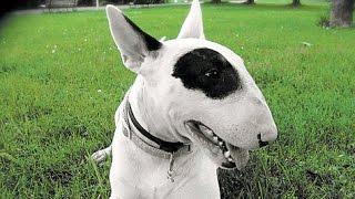 Sajan The Original Dog Trainer [ Kottayam,pala ] Call 09946515222