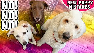 DON'T Introduce Your Puppy to Your Dogs This Way! 💔 Bringing New Puppy Home