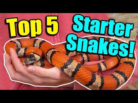 The Top 5 BEST Beginner Snakes!