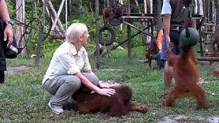 Orangutan part 1 of 4