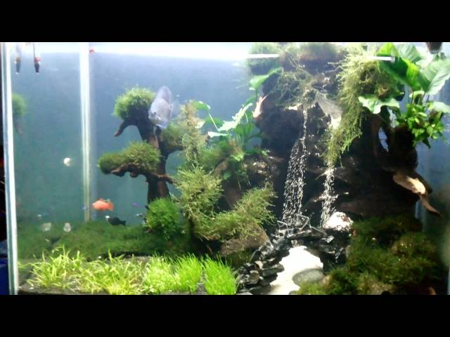 Aquascape air terjun