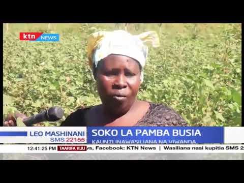 Soko la Pamba Busia: Kaunti yawasiliana na viwanda ili kuwatafutia wakulima soko