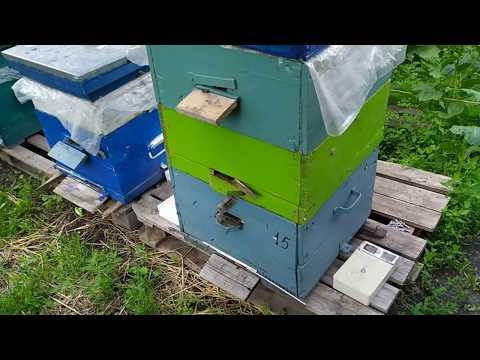 После облета... переводим пасеку на противороевое состояние, наращивая пчелу. 02/06/2020