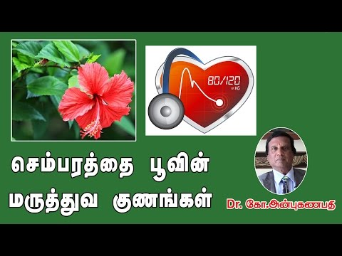 Video செம்பரத்தை  பூவின் மருத்துவ குணங்கள் | Medicinal benefits of Hibiscus flower