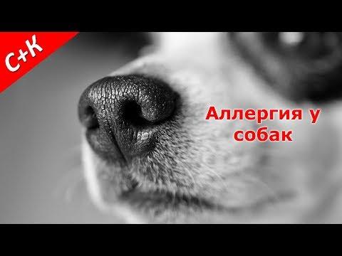 Аллергия у собак. Что делать?