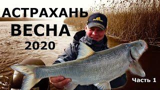 Рыбалка и отдых на нижней волге в 2020