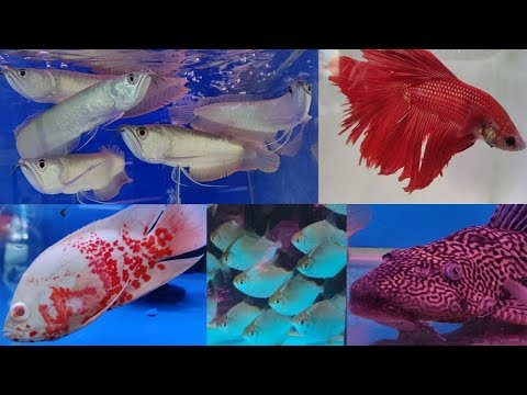 Pari Aquarium Fish Shop at Kurla Fish Market