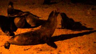 preview picture of video 'Harbor at Puerto Baquerizo Moreno, San Cristobal, Galapagos'
