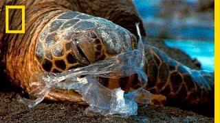 Um oceano de plástico