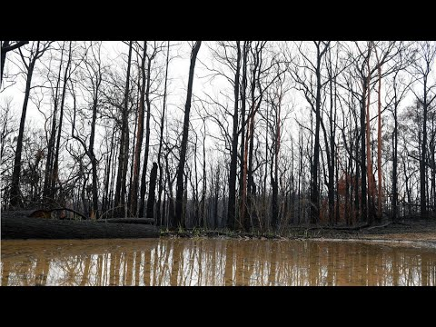 Storms, flash floods douse parts of bushfire-stricken Australia