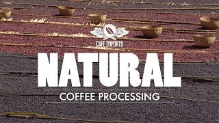 Natural Coffee Processing