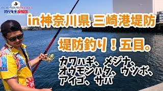 堤防釣り!五目in神奈川県三崎港堤防。カワハギ、メジナ、オオモンハタ、ウツボ、アイゴ、サバ!初心者釣り入門「釣果ですよっ」