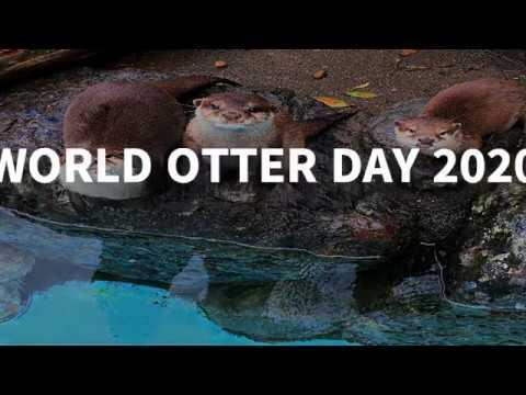 World Otter Day 2020 ‐世界カワウソの日(英語ver)