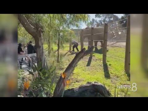 «Παρά τρίχα» σώθηκαν πατέρας και κόρη από επίθεση ελέφαντα