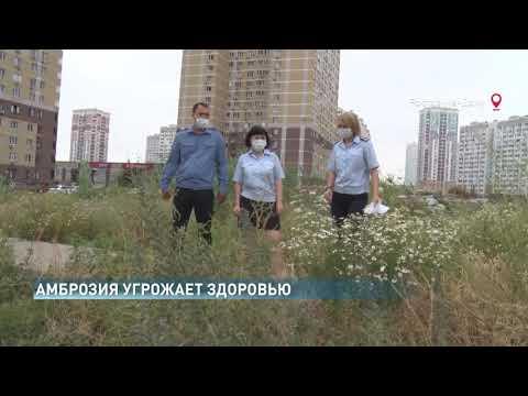 Управление Россельхознадзора выявило очаги произрастания амброзии полыннолистной в одном из спальных районов Ростовской области