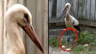 High Schooler Makes Robotic Limb for Stork