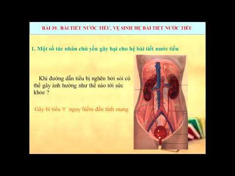 Sinh học 8 Bài tiết nước tiểu và vệ sinh hệ bài tiết nước tiểu 2