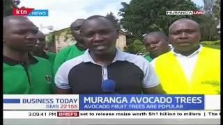 Farmers in Mt. Kenya Plant trees alongside crops on their farms