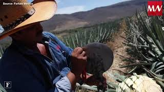 U.S. consumption of Mexican tequila increases 22.5%