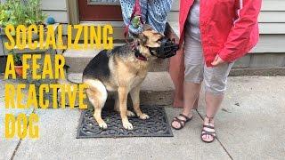 Socializing a Fear Reactive Dog