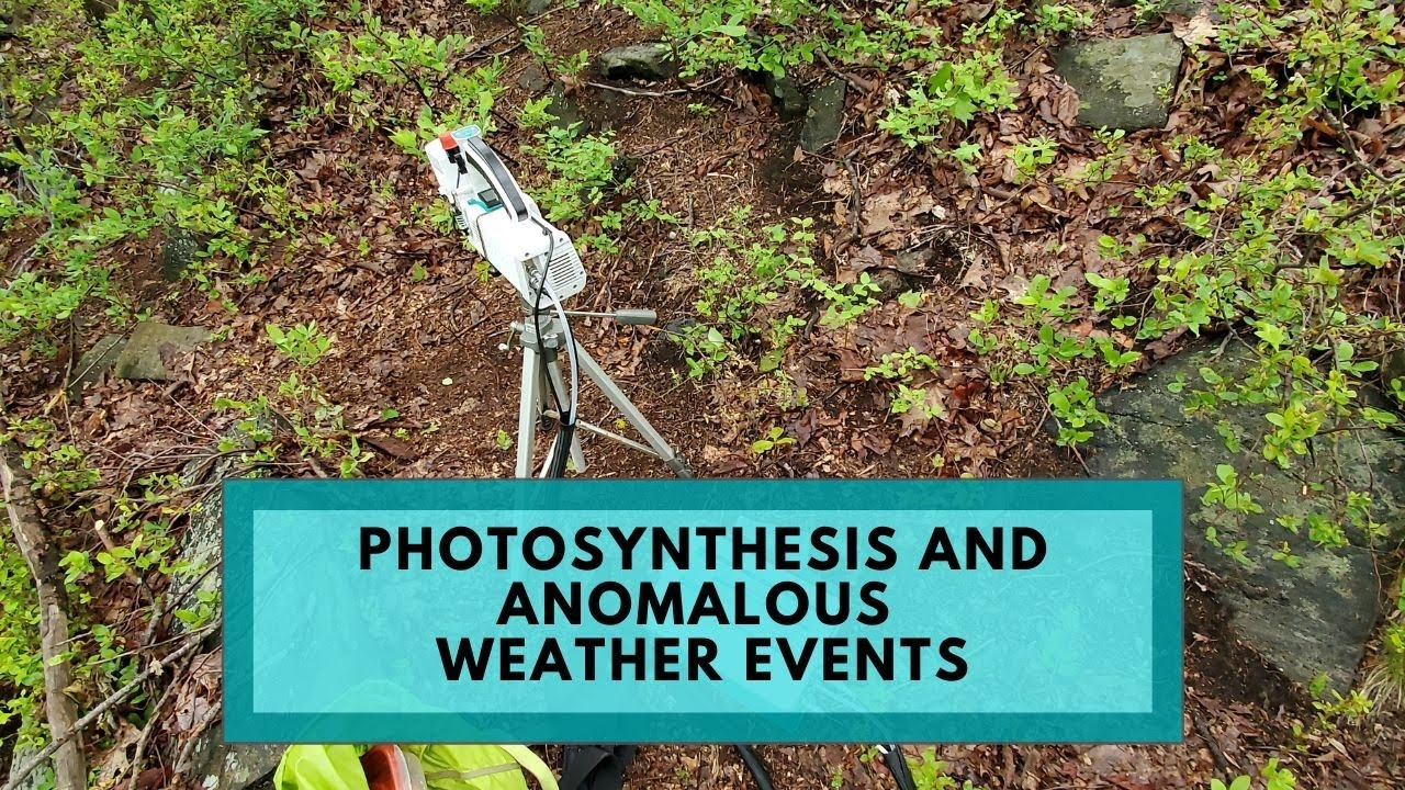 Photosynthesis And Anomalous Weather Events