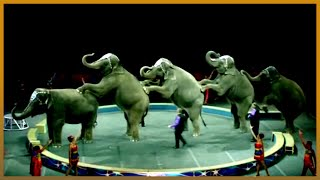 🇬🇧 UK's 250 years of circus 🎪: A look at how tastes have evolved   Al Jazeera English