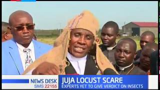 fear-in-juja-as-swarm-of-locust-raid-kigwe-farm-few-kilometers-away-from-juja
