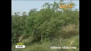 Eritrean Tigre News  2 May 2013 - Eritrea TV