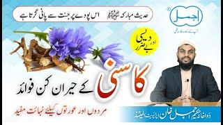 Kasni Ke Heran Kun Fayde | Chicory Benefits in urdu/hindi | Tukhme kasni ke