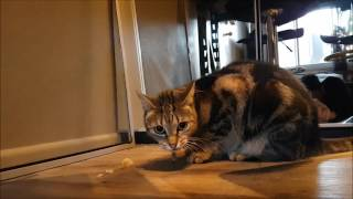 Naughty kitty makes ungodly sounds while eating stolen potato salad