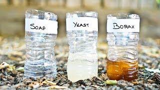 3 DIY Mosquito Trap Comparison Yeast vs Soap vs Borax
