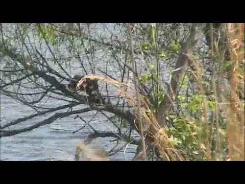 Holcomb Snake Hunting