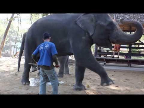 Слон .Опа Ган Гам Стайл
