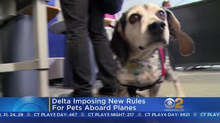 Delta Airlines Imposing New Rules For Service Animals Aboard Planes
