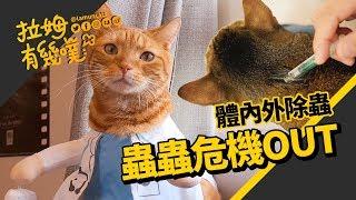 Get the flea out!! What is cat parasite?┃LAMUNCATS ♧