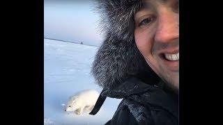 Автор ролика про песца живёт в Муравленко