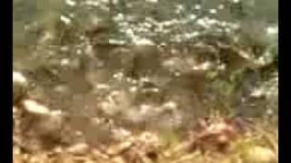 preview picture of video 'Mas vale pez en mano...'